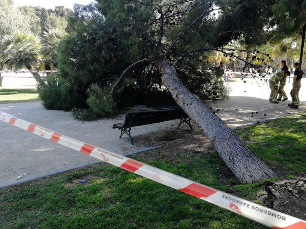 Árbol que ha caído en un banco del parque de La Aljafería.
