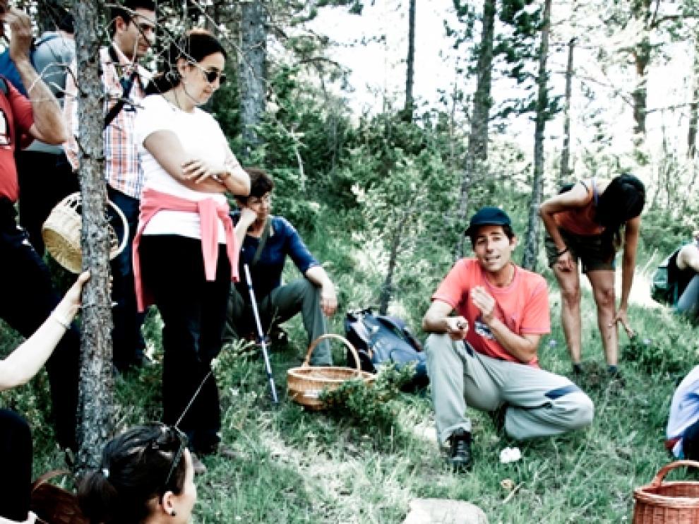 Buscando setas en el entorno de Borau, comarca de La Jacetania.