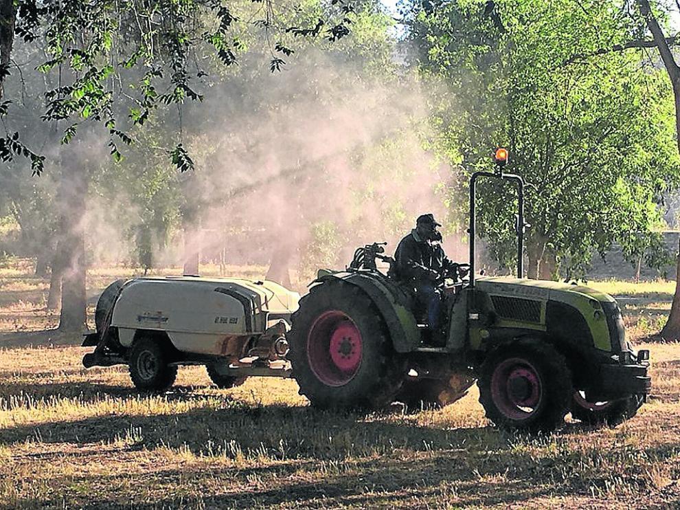 El tratamiento ha empezado a aplicarse esta semana en zonas verdes de Fraga.