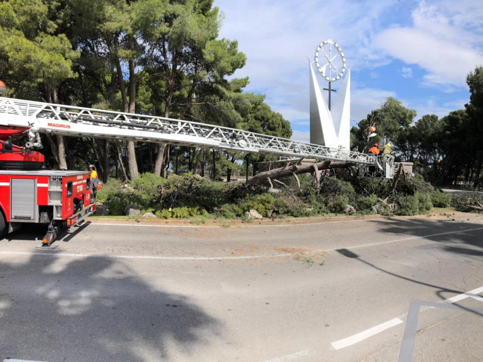 Retiran un árbol caído en el Parque de Atracciones de Zaragoza.