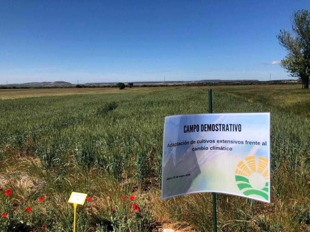 Se han puesto en marcha campos de ensayo, con los que se pretende investigar nuevas variedades de semillas.