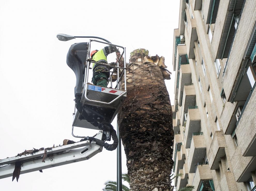 Calle Mariana Pineada. Retiran una palmera de 12 metros por el ataque del picudo rojo /16-12-2014/ Foto: Asier Alcorta