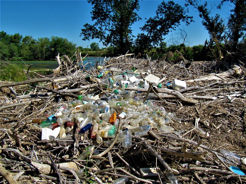 Los microplásticos amenazan a un número cada vez mayor de especies animales, así como a la salud humana.