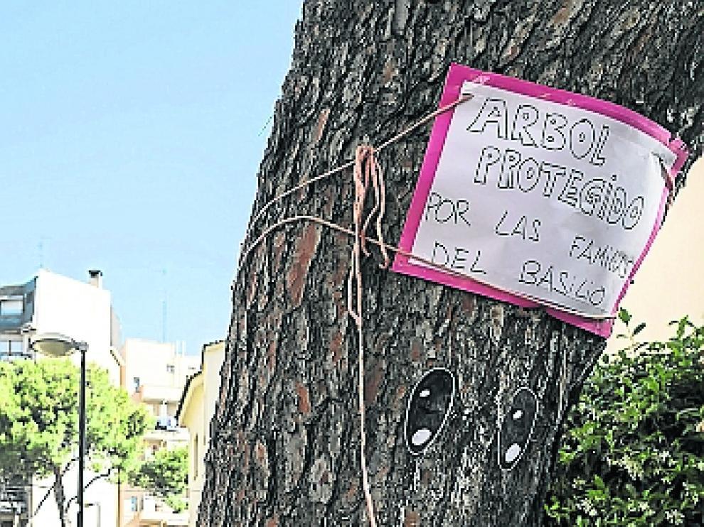 Uno de los pinos aún en pie