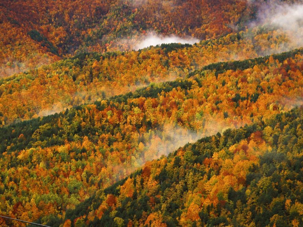 Foto de un bosque en Fanlo, Primer Premio de Fotografía Europarc de bosques maduros.