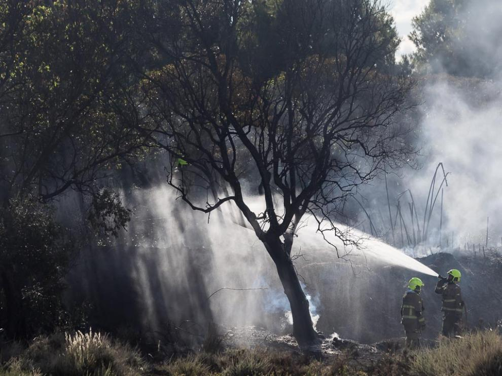 Se trata de un incendio forestal en la calle Marcelino Álvarez del zaragozano barrio de Casablanca, cerca de la Cooperativa de Auto Taxi.