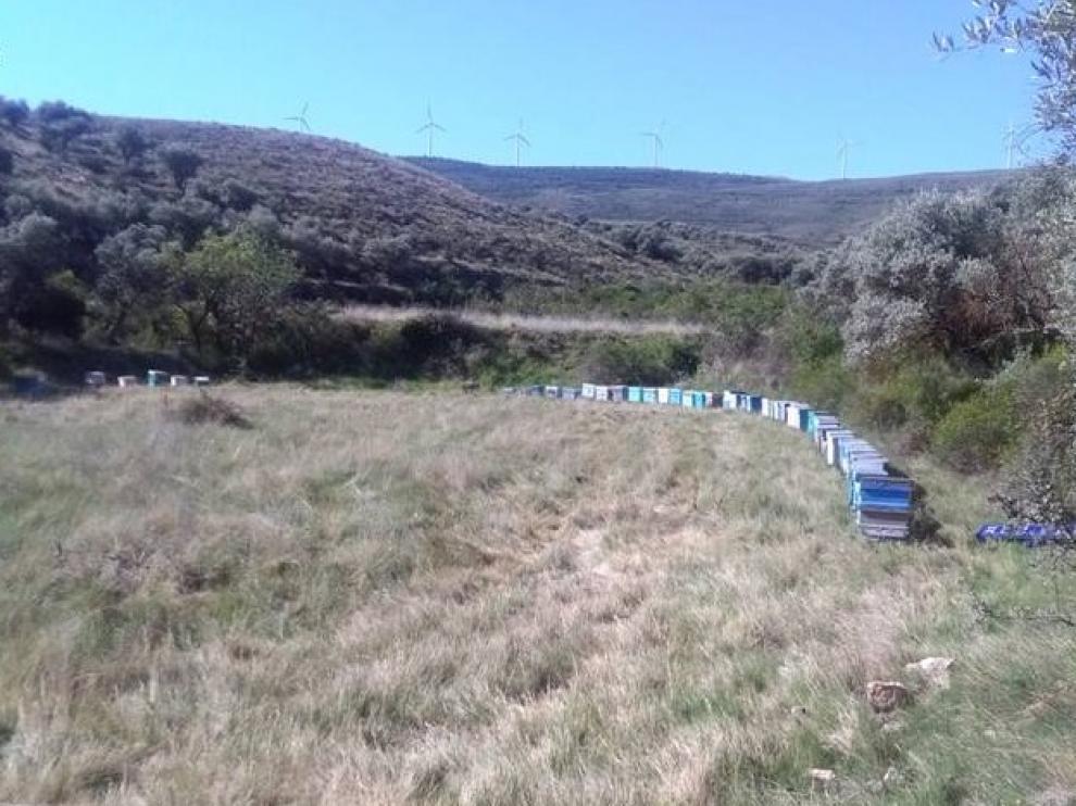 Las colmenas recuperadas por la Guardia Civil en Tarazona.