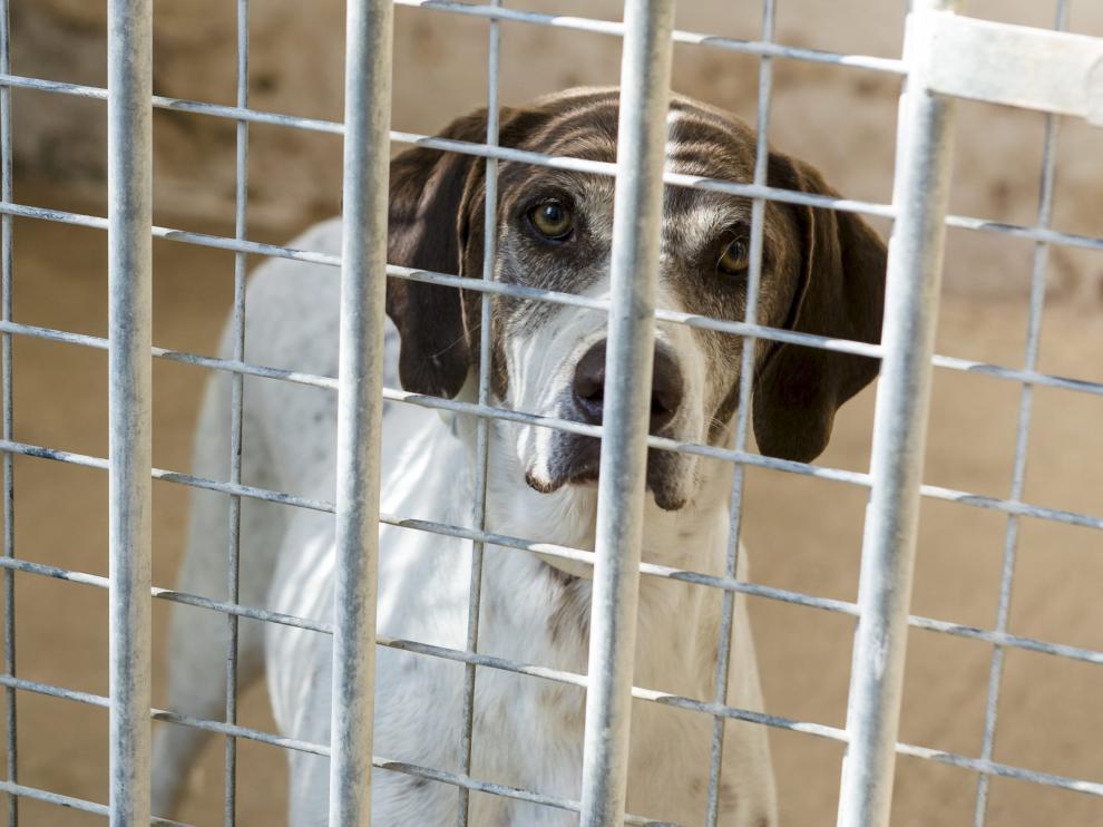 Un perro acogido en el Centro Municipal de Protección Animal tras ser abandonado.