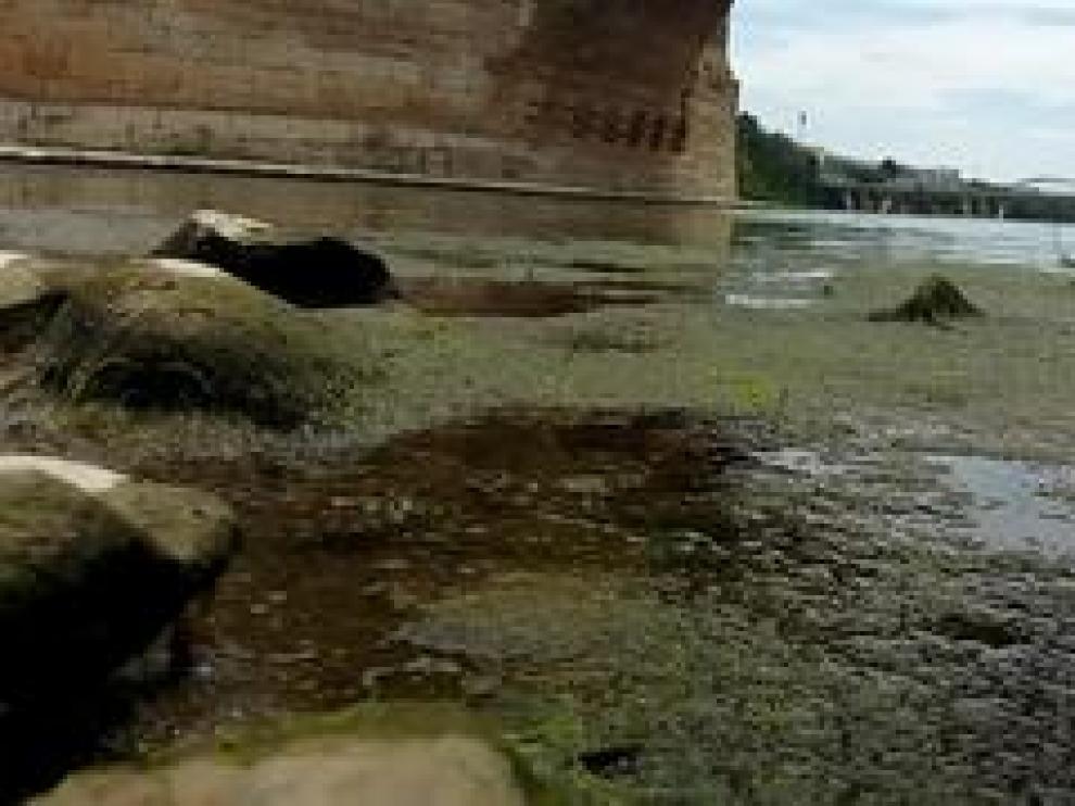 El río Ebro a su paso por la capital aragonesa registra durante estos días el nivel de caudal más bajo del año. Además, se incrementa la presencia de mosquitos en su ribera.