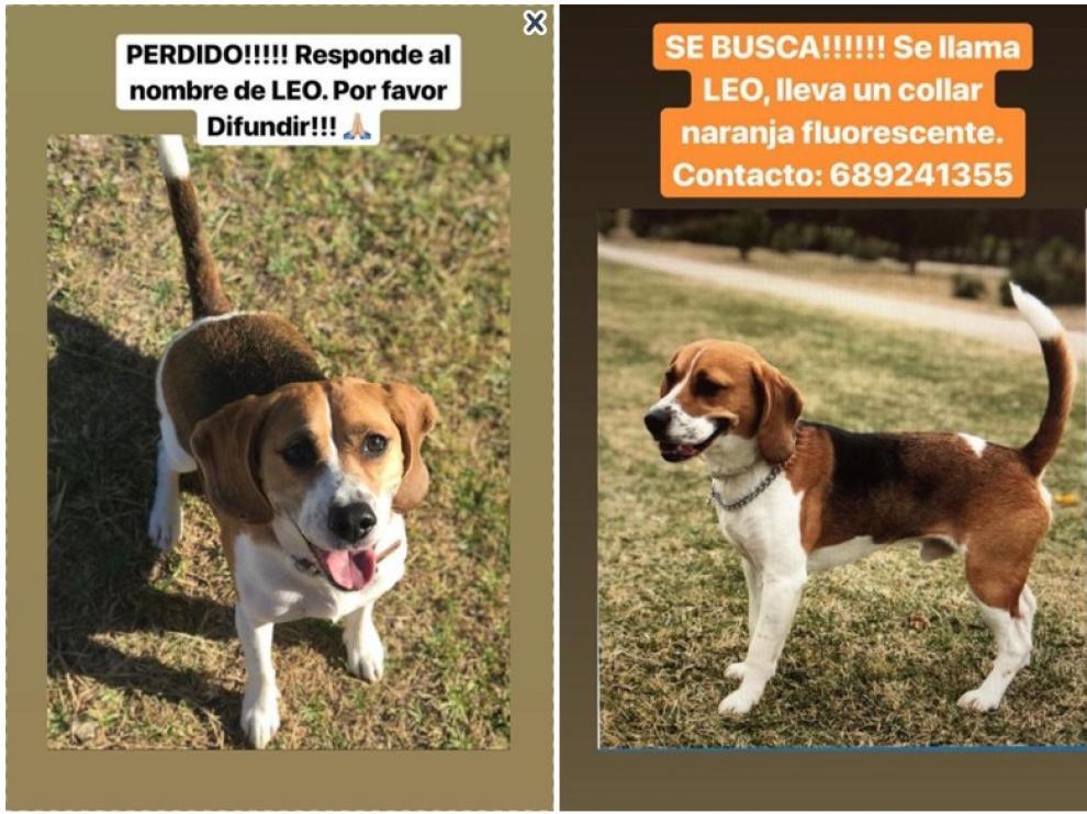 El perro desaparecido este sábado por la noche en el barrio de La Paz de Zaragoza.