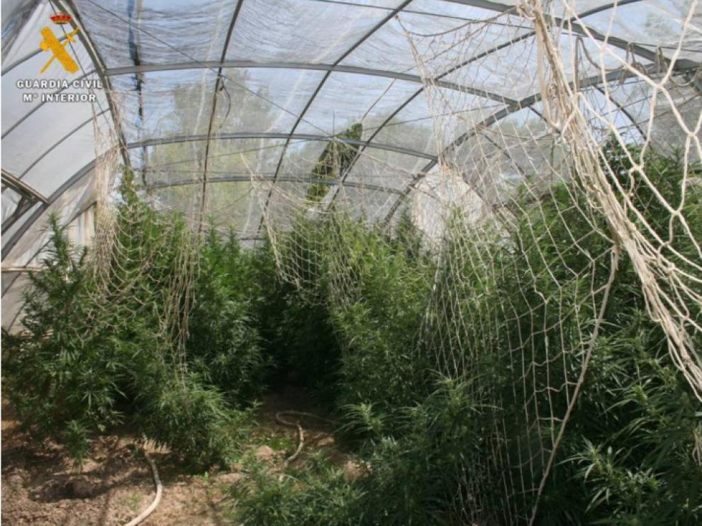 La plantación de marihuana en Aljafarín.