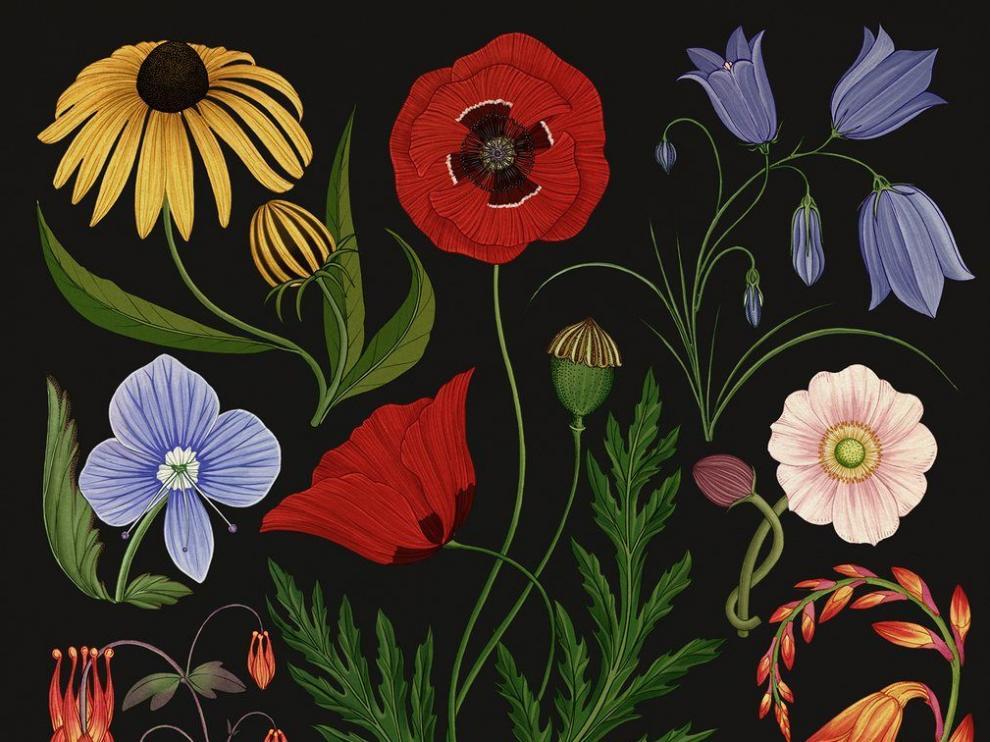 'Sublime Botanicum', obra de la artista Katie Scott que muestra la delicia del jardín nocturno.