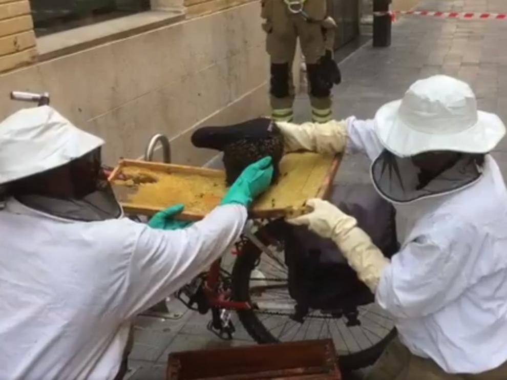 """Así retiran los bomberos enjambres """"desnudos"""" de abejas en Zaragoza"""