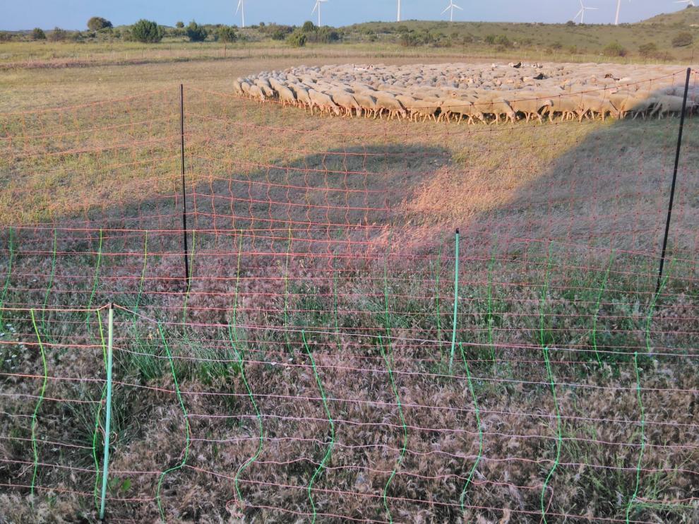 Pastores eléctricos instalados en Torralba de Aragón, uno antilobo de 1,80 metros y otros normales.
