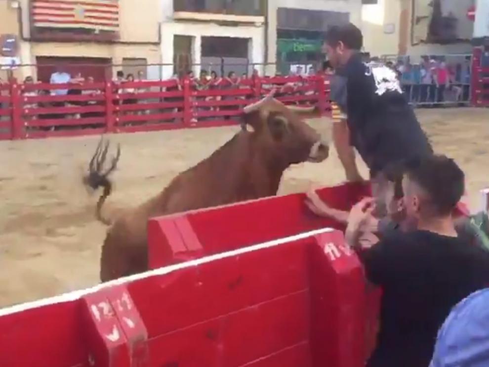 Un momento del vídeo que se ha hecho viral y que se grabó el pasado sábado en Novallas durante un festejo taurino.