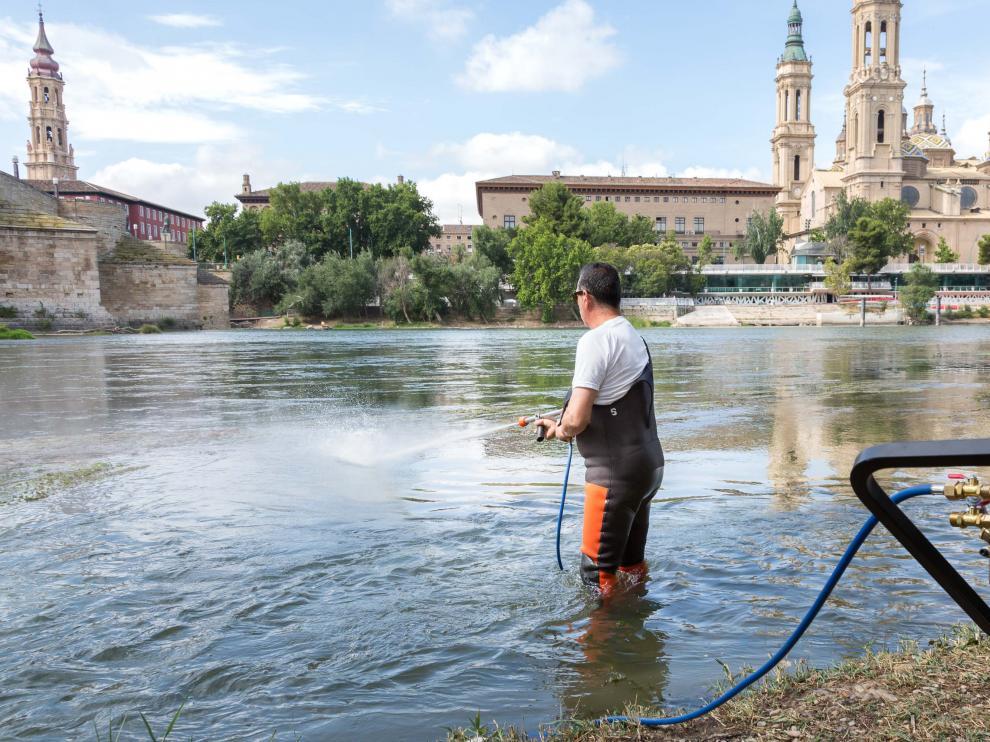 Dos máquinas sulfatadoras controlarán la plaga de mosca negra en Zaragoza
