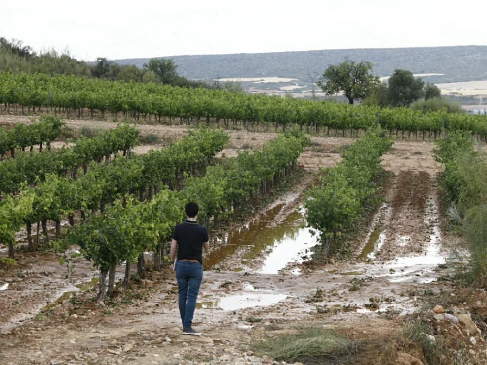Daños causados por el granizo en el campo aragonés.