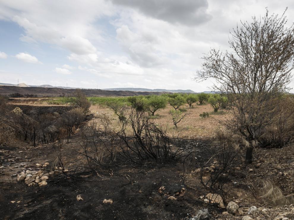 Varios de los árboles afectados por el incendio, junto a las vides dañadas por la granizada