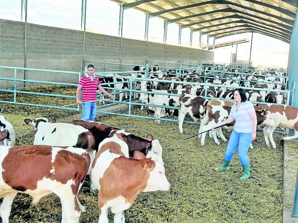 Neres Sarasa y su marido en su explotación de terneros, en Aguas, que quiere ampliar.