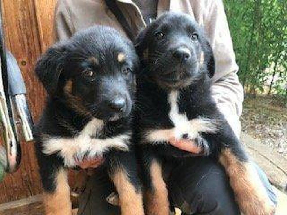 Los dos cachorritos de un mes y medio que necesitan familia de adopción