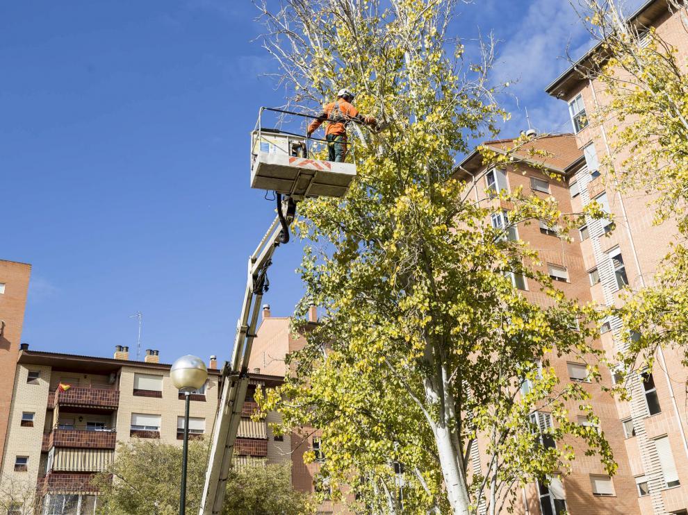 La Almozara, jardines de Lisboa, poda y saneamiento arbolado / 17-11-2017 / FOTO: GUILLERMO MESTRE [[[FOTOGRAFOS]]]