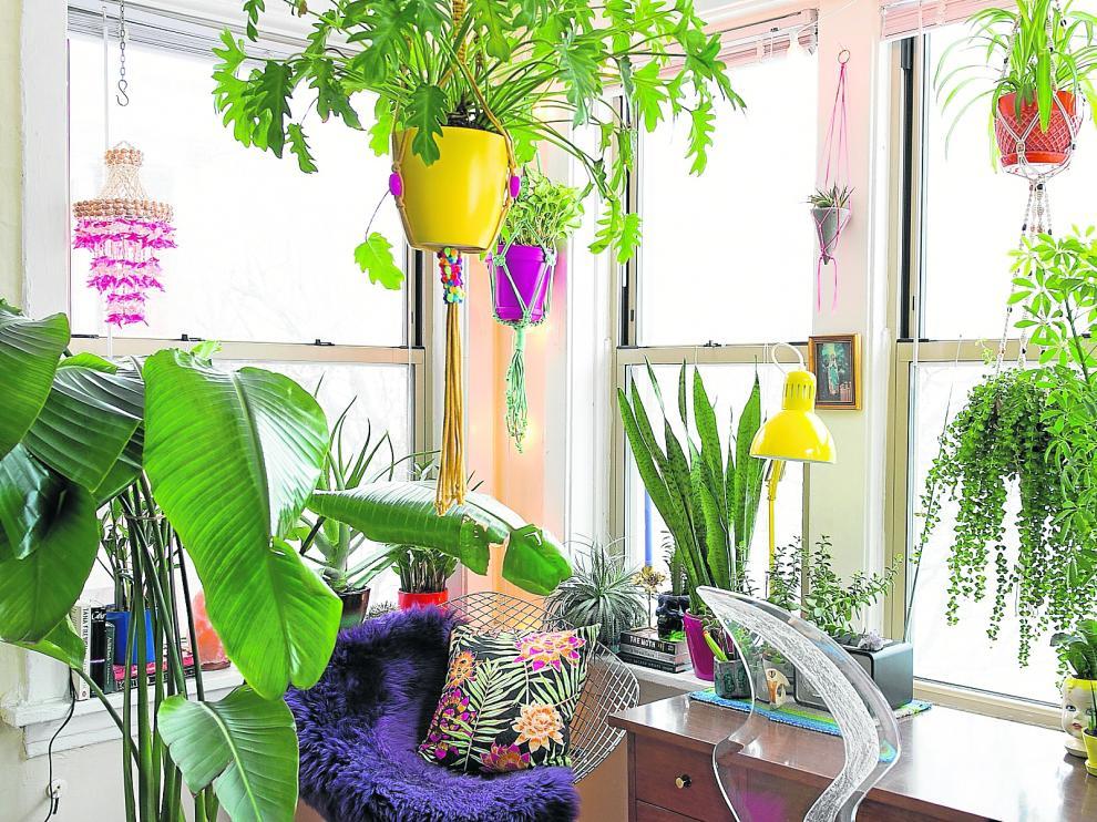 Plantas que mejoran el aire en el hogar