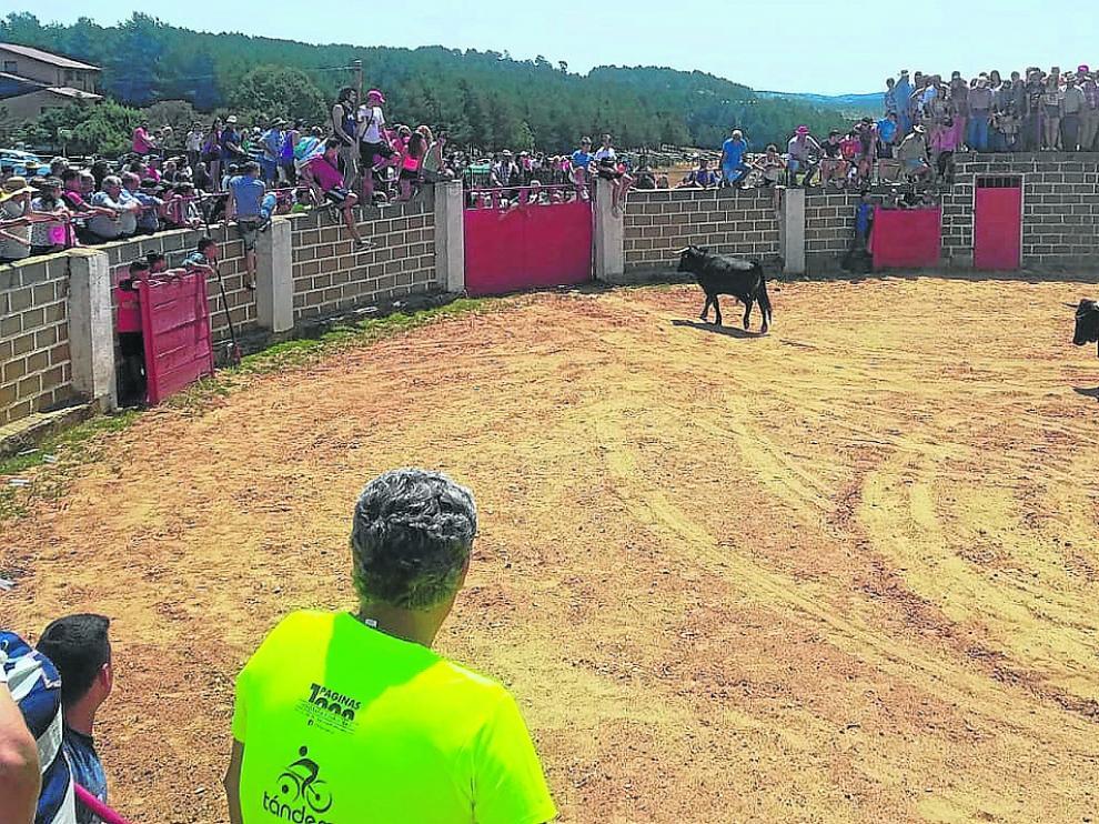 Un momento de la suelta de novillos en la plaza de toros de la localidad de Griegos.