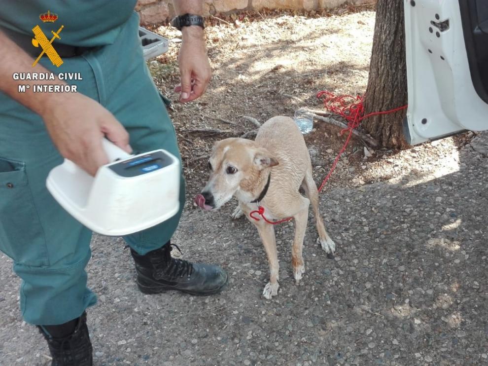 Los agentes del Seprona localizaron al propietario gracias al microchip del perro.