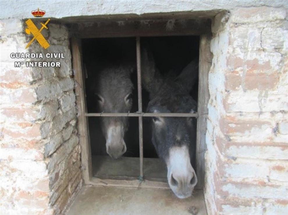 Dos de los animales supervivientes en la explotación.