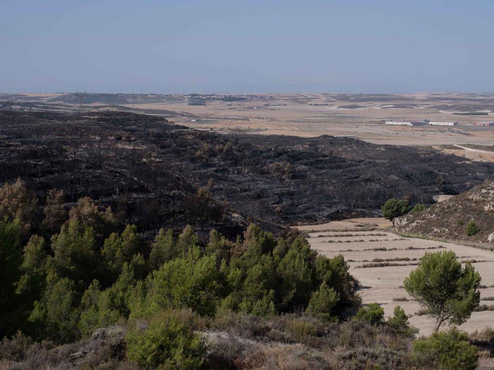 Superficie afectada por el incendio declarado el pasado martes entre Leciñena y Perdiguera.
