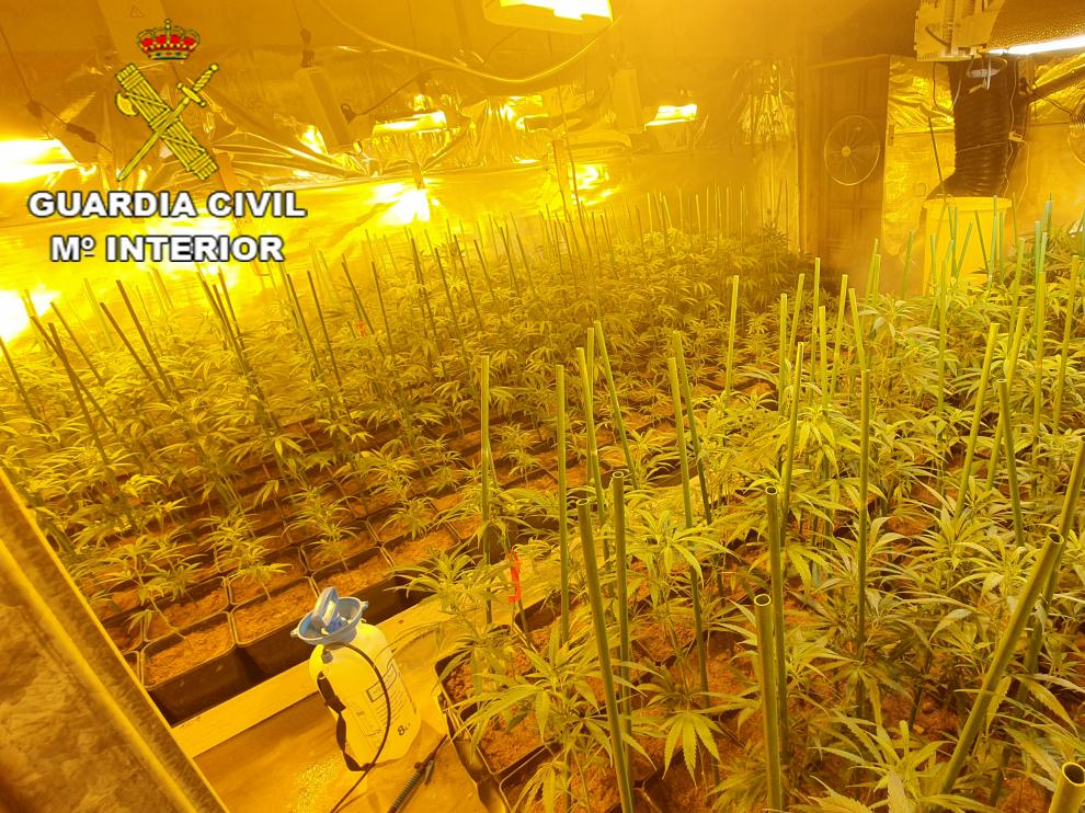 Imagen de la plantación de marihuana localizada en la provincia de Teruel.