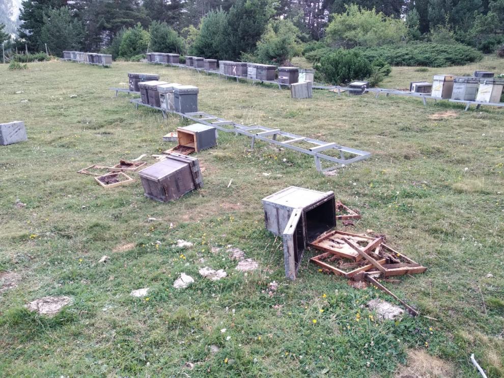 Colmenas de abejas destrozadas por el oso Goiat hace dos días cerca de Plan