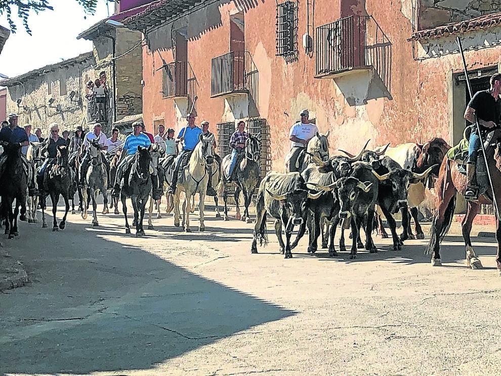 La vereda del toro cerril con los mansos para recorrer el terreno por el que discurrirá hoy el recorrido del encierro a caballo