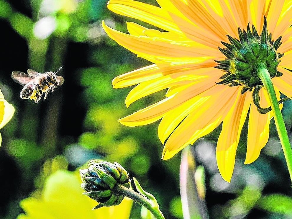 Las especies florales son beneficiosas para el incremento de las poblaciones de polinizadores.