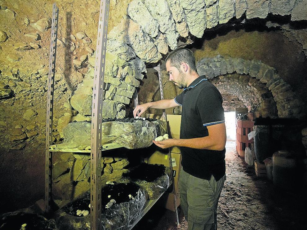 El joven Álvaro Alcalá, en el interior de una de las cuevas de Torrijo donde cultiva los champiñones.