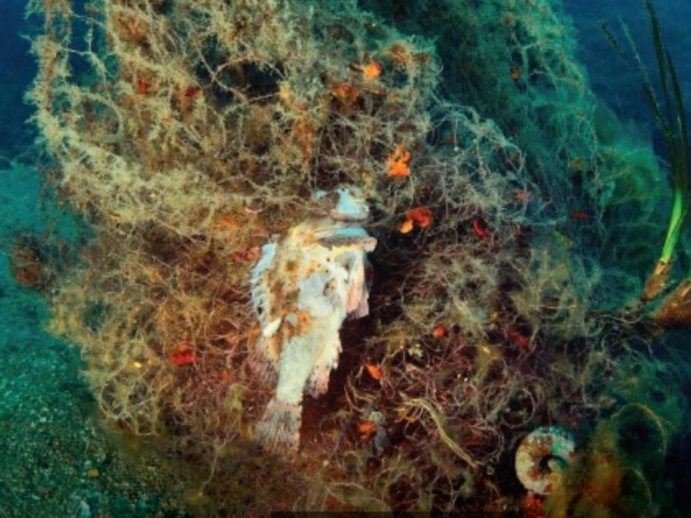 Las redes y otros utensilios de pesca que se abandonan o se pierden en los fondos marinos son una amenaza grave para la vida marina.