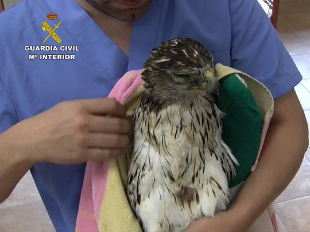 Uno de los 120 ejemplares de aves electrocutadas localizados por la Guardia Civil.
