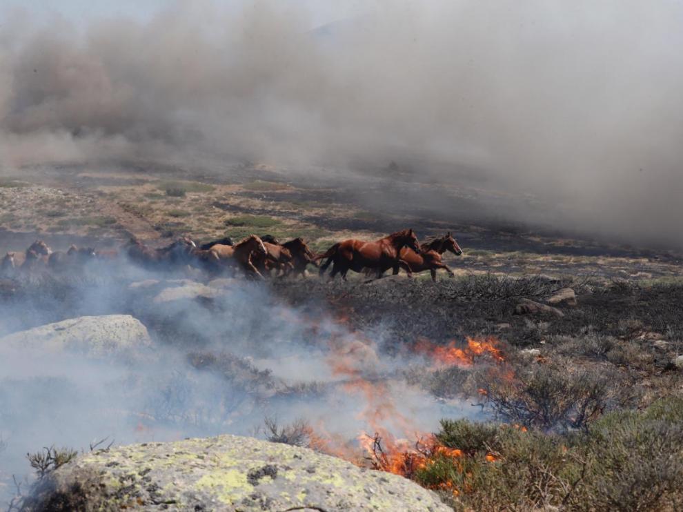 Los caballos que corrían asustados por el fuego declarado.