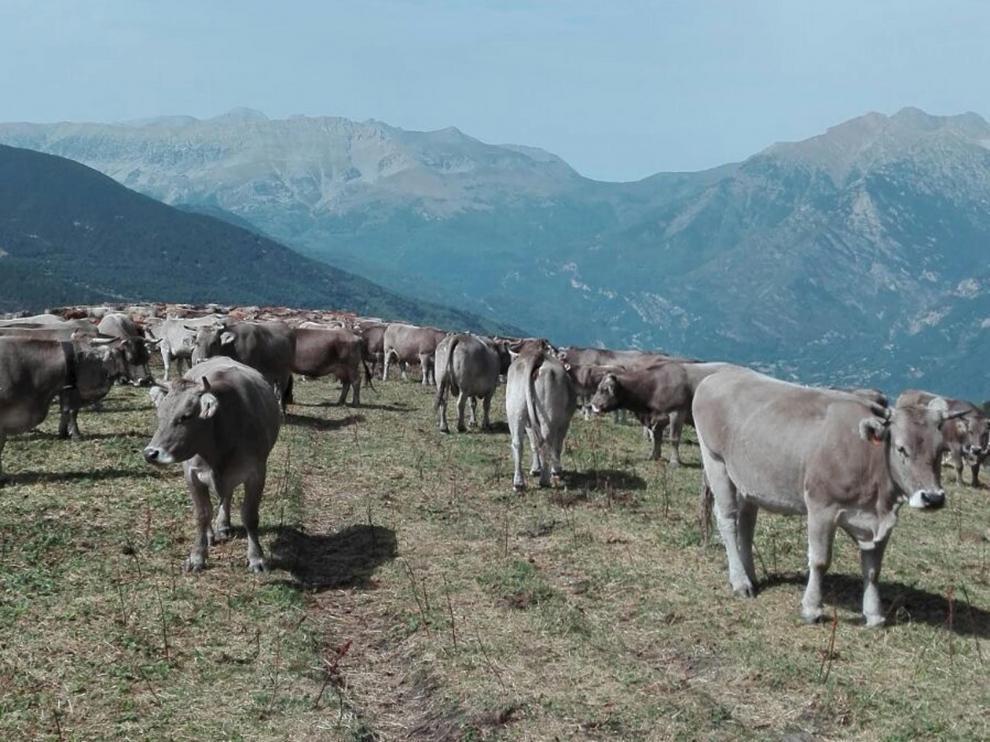 En Aragón la ganadería aporta alrededor del 3% del producto interior bruto aragonés.