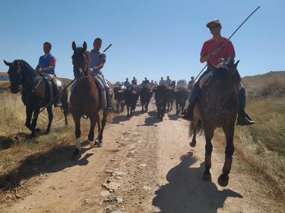 Caballistas y toros se dirigen hacia Grisel a través de campos.