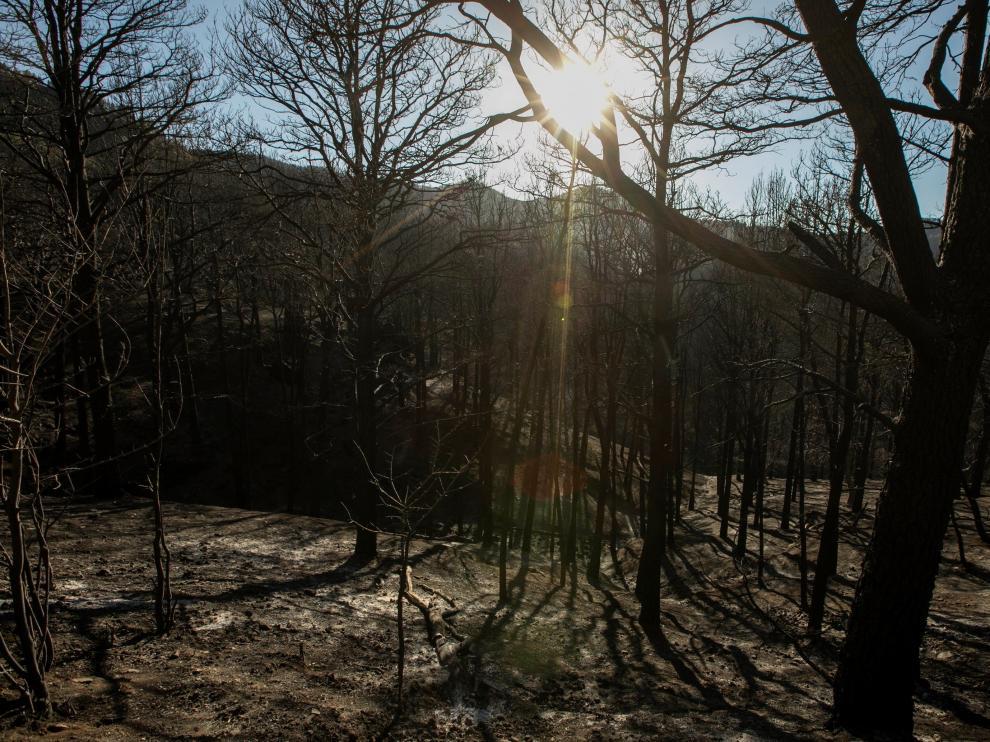 El Barranco de los Pajaritos, punto clave del inicio del fuego se presenta totalmente desierto y sin signo de vida.