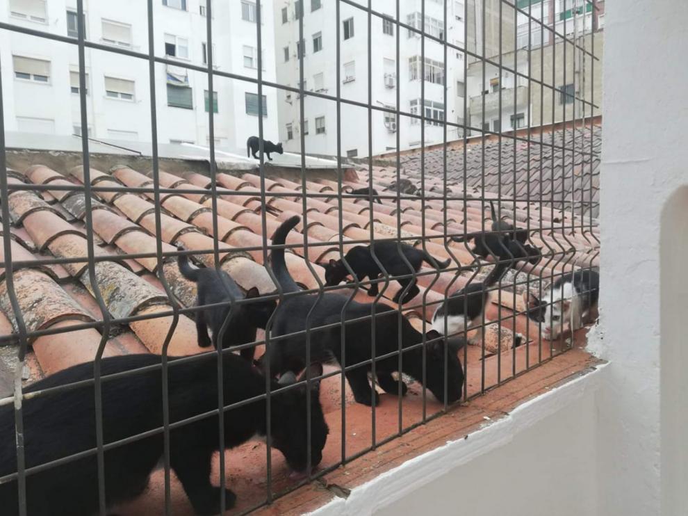 Una camada de unos 20 gatos vive en el patio interior de Avenida Navarra 12.