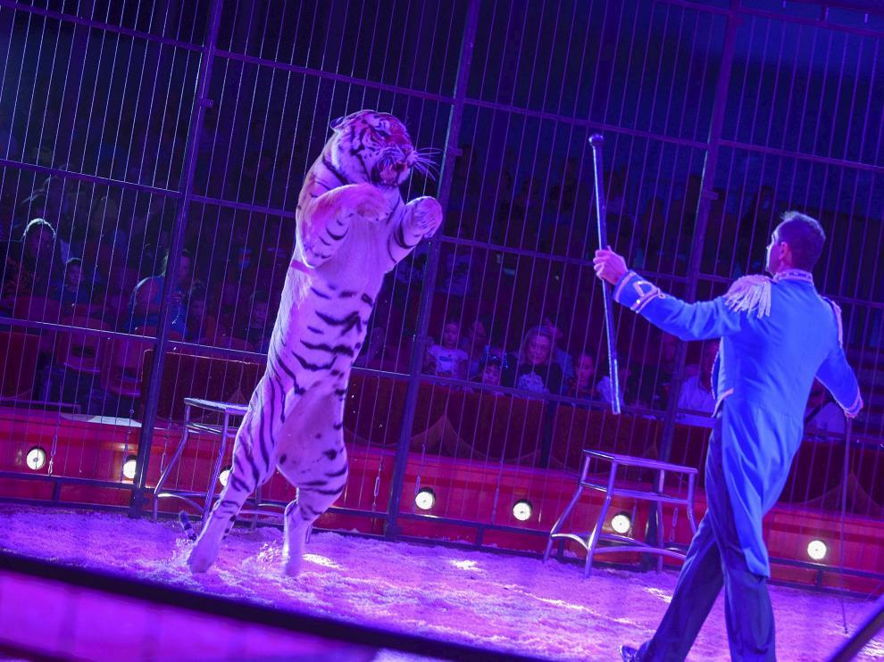 Espectáculo de circo con animales durante las fiestas del Pilar de 2014.