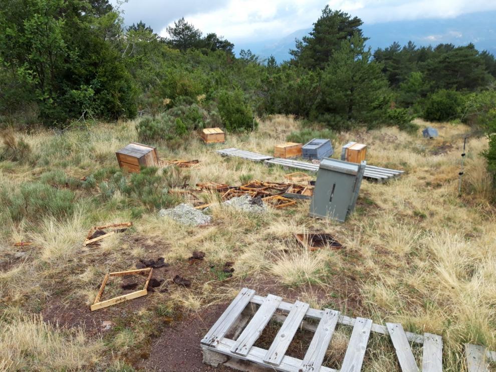 Daños causados presuntamente por la osa Sarousse en un colmenar del municipio de Laspaúles
