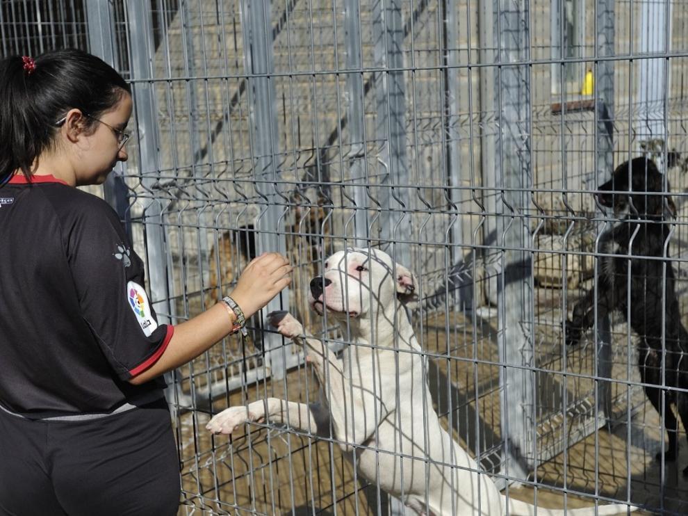 Animales en el centro de acogida de Huesca.