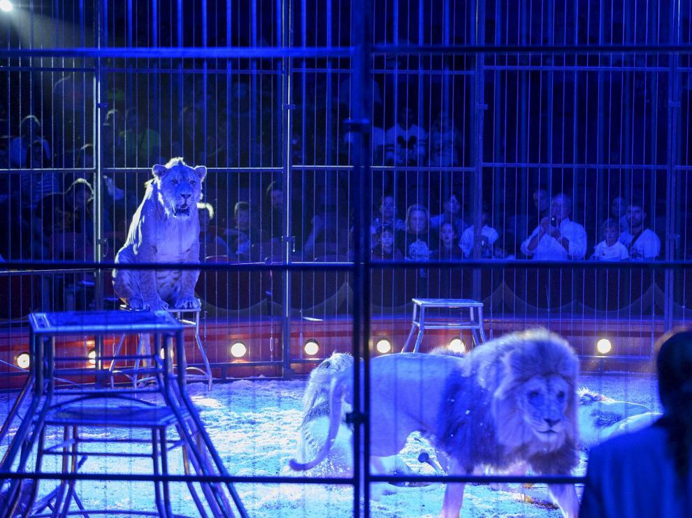 Circo con animales en el Pilar en 2014, último año en el que se permitió este tipo de espectáculos.