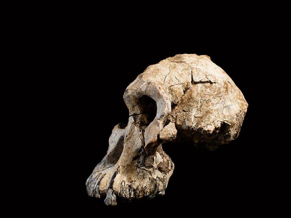 Cráneo encontrado en Etiopía