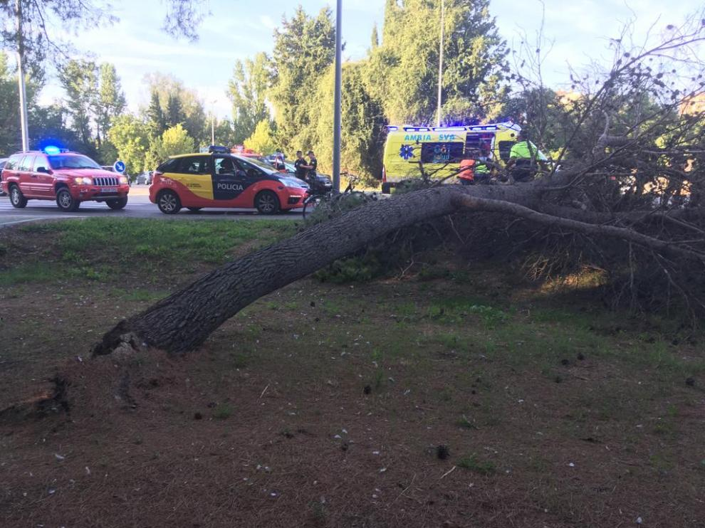 Imágenes del rescate del hombre atrapado bajo el árbol.