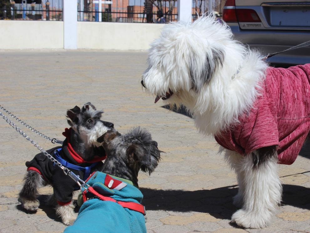 En el Registro de Identificación de Animales de Compañía de Aragón hay dadas de alta unas 289.000 mascotas. El 98% de ellas son perros.
