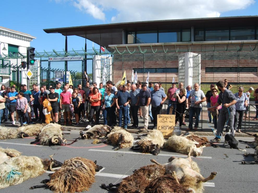 Ovejas muertas en la protesta frente a la subprefectura de Bayona.